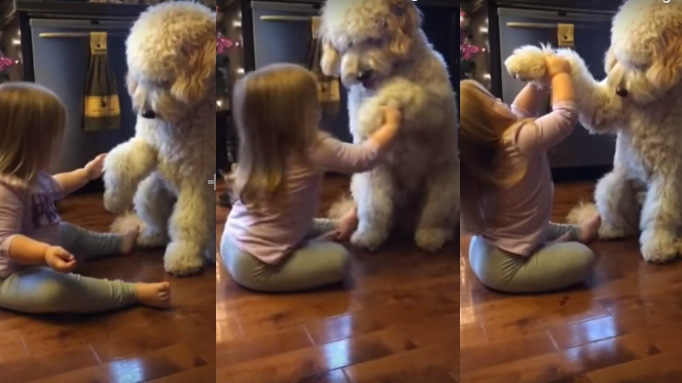This Little Girl Teaching Her Dog How To Say Hi Is Cuteness Overload