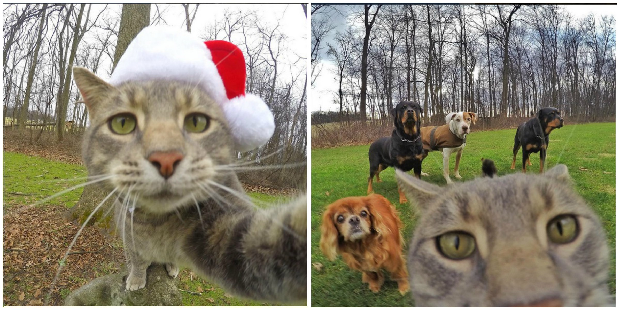 This Cat Is An Expert In Clicking Selfies, Period!