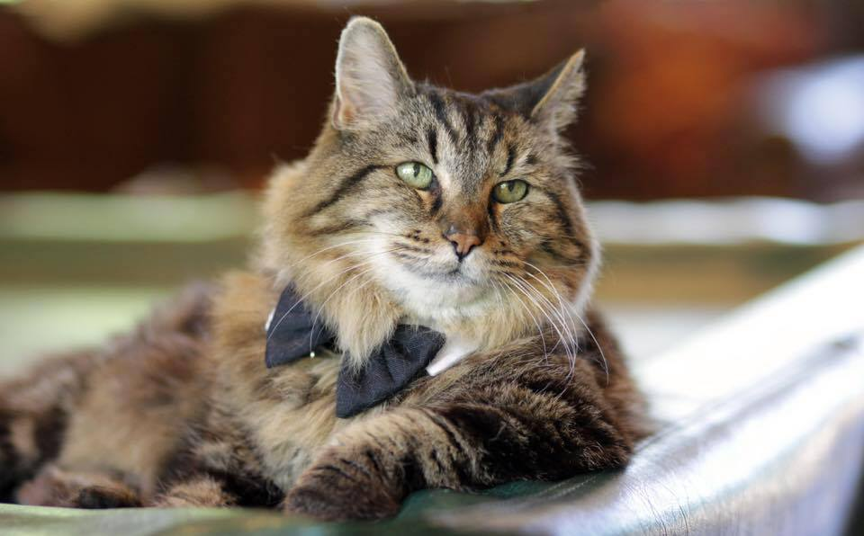 Meet World's Oldest Cat, Corduroy, Age 121 In Cat Years