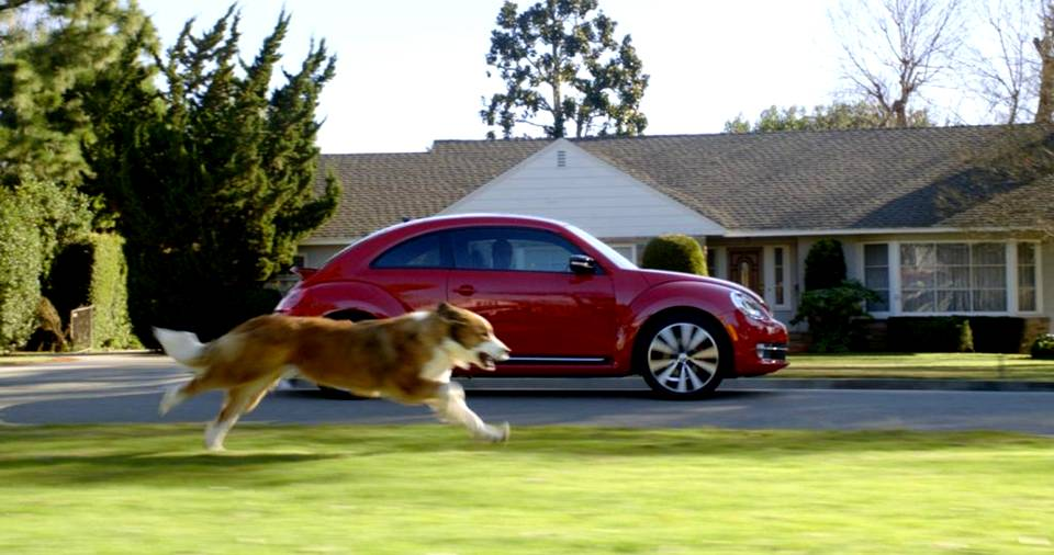 Ever Wondered Why Dogs Chase Running Vehicles? Here's The Answer