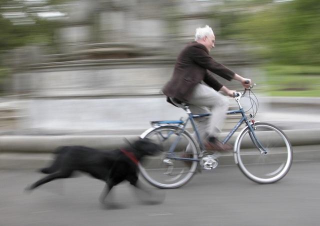dog-chase-vehicles
