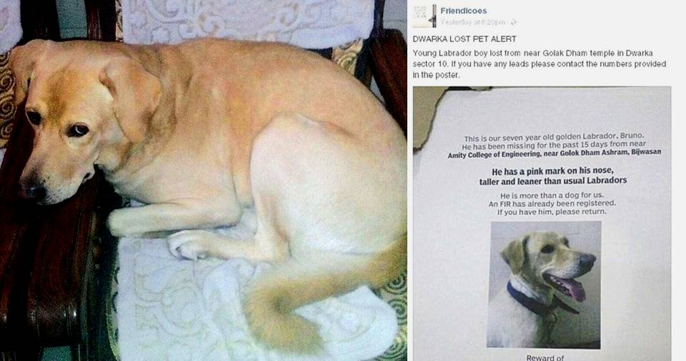 A Facebook Post Reunited A Missing Dog Bruno With His Owner. Read This Heart Touching ...