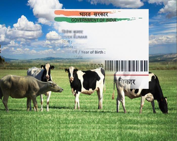 Holy Cow! Soon, Indian cows will have their own Aadhaar number with details of horn and ...